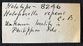 View Holoporella repens Canu & Bassler, 1929 digital asset number 1