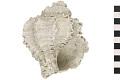 View Murex Shell, Fossil shell digital asset number 4