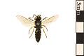 View Sand Wasp digital asset number 1