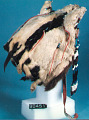 View Ermine Cap or Headdress, Beaded digital asset number 24