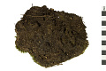 View Dicranum Moss, Broom Moss digital asset number 1
