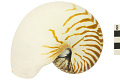 View Chambered Nautilus, Emperor Nautilus digital asset number 0