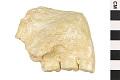 View Fossil Ape, Fossil Primate, Fossil Ape, Fossil Primate digital asset number 0