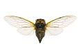 View Cicada digital asset number 2