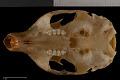 View Tamiasciurus hudsonicus fremonti digital asset number 8