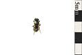 View Digger Wasp digital asset number 0