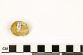 View Ammonite digital asset number 6