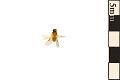 View Pergid Sawfly digital asset number 1