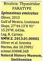 View Spinaxinus emicatus digital asset number 1