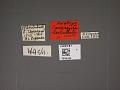 View Compseuta lamellata digital asset number 1