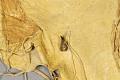 View Woman's Buckskin Dress digital asset number 4