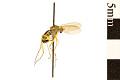 View Long-legged Fly digital asset number 1