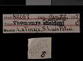 View Thomomys umbrinus potosinus Nelson & Goldman, 1934 digital asset number 0