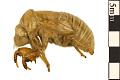 View Cicada digital asset number 1