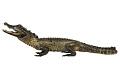 View Marsh Crocodile, Mugger Crocodile digital asset number 8