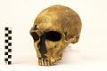 View La Ferrassie 1, Neanderthal Man, Fossil Hominid digital asset number 3