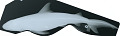 View Carcharhinus melanopterus digital asset number 0