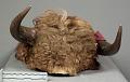 View Headdress Buffalo Hide And Horns digital asset number 4