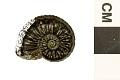 View Ammonite digital asset number 1