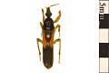 View Assassin Bug, Assassin Bug, Kissing Bug digital asset number 0