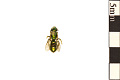 View Sweat Bee digital asset number 0