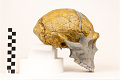 View Zhoukoudian, Early Human, Fossil Hominid digital asset number 10