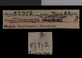 View Thomomys umbrinus zacatecae Nelson & Goldman, 1934 digital asset number 0