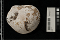View Shell Gorget And Beads digital asset number 2