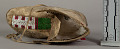 View Child's Moccasin digital asset number 4