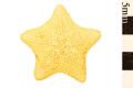 View Goose Foot Starfish, Starfish digital asset number 2
