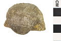 View Brachiopod, Strophomenid Brachiopod digital asset number 3