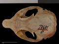 View Urocitellus canus digital asset number 7