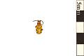 View Twelve-spotted Asparagus Beetle digital asset number 0
