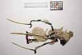 View Five minature wayang kulit (shadow puppets) digital asset number 14