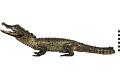 View Marsh Crocodile, Mugger Crocodile digital asset number 0