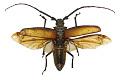 View Long-horn Beetle, Long-horned Beetle digital asset number 2
