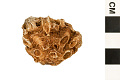View Fossil Horn Coral digital asset number 1