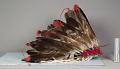 View Feather Bonnet Headdress digital asset number 0
