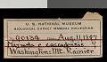 View Marmota caligata cascadensis Howell, 1914 digital asset number 0