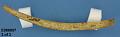 View Deer Rib Bones For Preparing Cedar Bark (1 Lot) digital asset number 0