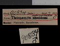 View Thomomys umbrinus enixus Nelson & Goldman, 1934 digital asset number 0