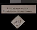 View Thomomys umbrinus potosinus Nelson & Goldman, 1934 digital asset number 1