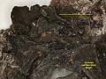 View Collema subflaccidum Degel. digital asset number 0