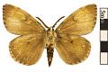 View Gypsy Moth digital asset number 0