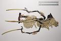 View Five minature wayang kulit (shadow puppets) digital asset number 12