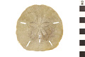 View Keyhole Sand Dollar digital asset number 0