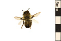 View European Honey Bee digital asset number 1