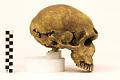View La Ferrassie 1, Neanderthal Man, Fossil Hominid digital asset number 1