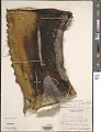 View Agave salmiana var. ferox (K. Koch) Gentry digital asset number 1