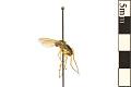 View Long-legged Fly digital asset number 0